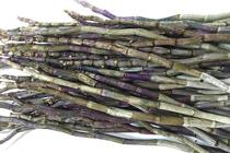 铁皮石斛鲜条